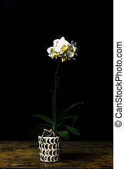 Long stemmed white orchid