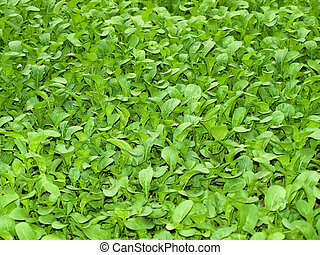 Greeen salad - Just a new green salad usable for background...