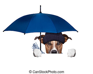 rain umbrella dog hiding behind a blank banner