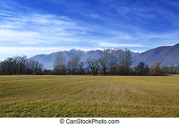 Field and mountains - Field with trees and snow-capped...