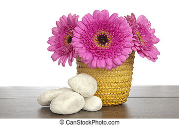 Pink Gerbera in yellow basket and white rocks - Pink Gerbera...