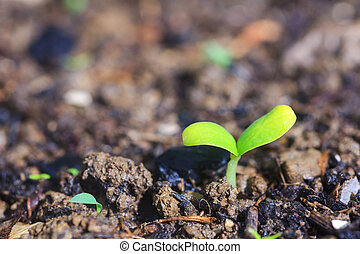 Young plant - Photo of young plants in the ground