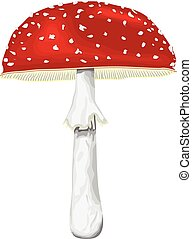 Fly-agaric with cap and leg. - Illustration of mashroom...