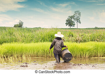 Thai Farmer Working At Rice Plantation