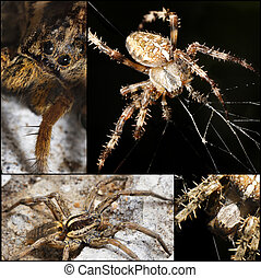 scary Spider collage