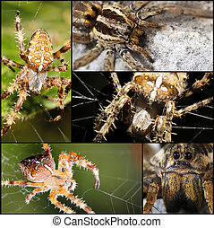 scary Spider collage - scary spider on web a macro collage