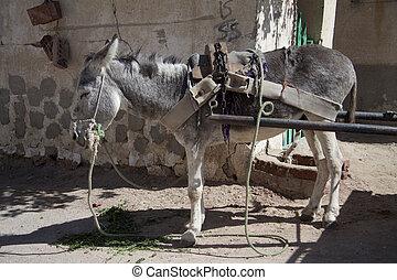 Donkey on natur hintergrund