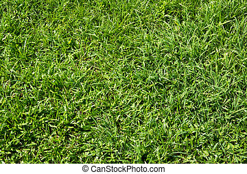 Green grass background - Seamless background of a green...