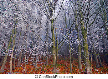 autumn frost on trees, bare beech frosted branches