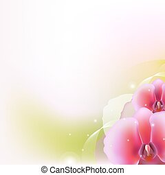 Illustration With Orchid