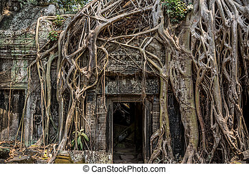 Trees roots growing over Angkor Wat Ruins, Cambodia, Asia. Tradition, Culture and Religion.