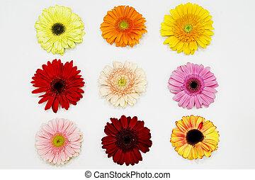 Nine Gerbera Daisy - Nine beautiful gerbera daisy in a white...