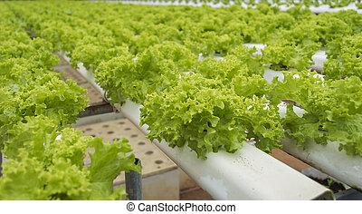 Vegetables hydroponics garden