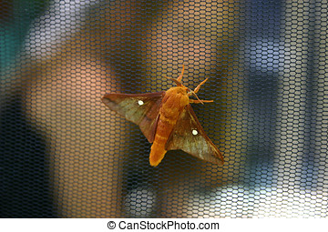 No Bugs Allowed - Close up of a colorful moth on the outside...