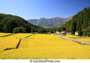 Japan Alps and rice field, Hakuba village, Nagano, Japan