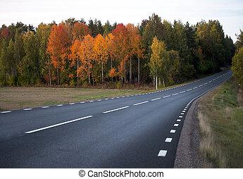 asphalt road in autumn landscape