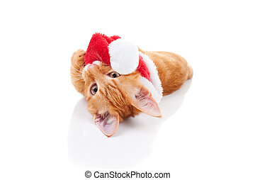 Christmas Cat - Naughty Christmas kitten cat and Santa hat