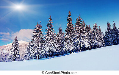 winter - Fantastic winter landscape. Blue sky. Carpathian,...