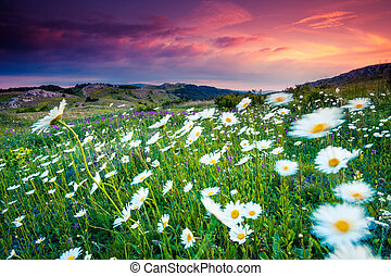 flower - Majestic sunset in the mountains landscape....