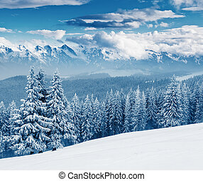 winter - Fantastic sunny day is in mountain landscape...