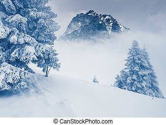 winter - Fantastic sunny day is in mountain landscape....