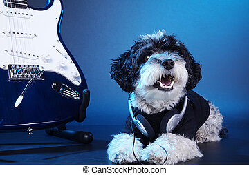 dog in studio with a guitar