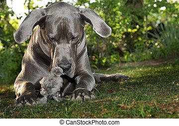 chien, poussin