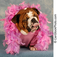 dog in pink boa sticking tongue out - spoiled dog with pink...