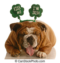 St Patricks Day dog - bulldog wearing kiss me im irish...