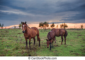 horse - three horse on the meadow