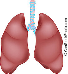 Human lung anatomy - vector illustration of Human lung...