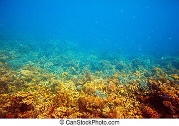 Red sea water  -  tropical fishes in Red sea water