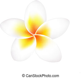 Frangipani Flower Isolated, With Gradient Mesh, Vector...