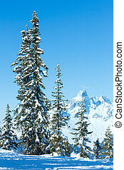 Winter mountain fir forest landscape - Winter mountain fir...