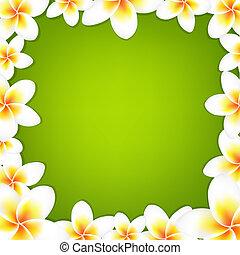 blanc, frangipanier, cadre, à, vert, fond