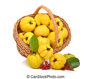 Ripe quince in the basket isolated on white