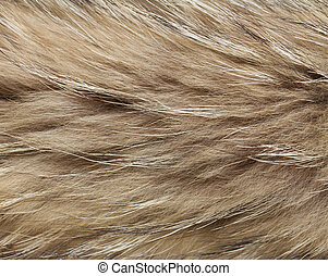 abstract raccon fur background - close up shot of abstract...