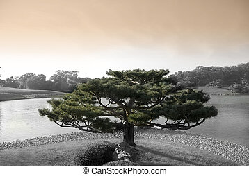 Zen Tree - Zen tree in japanese botanic garden with lake
