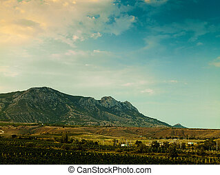 Vineyard on the hilly mountain, environmental backgrounds