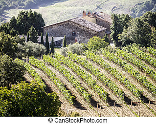 Tuscany wine - An image of a Tuscany landscape with wine in...