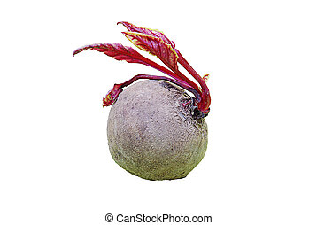 red turnip on white - Red turnip isolated and clipped on...