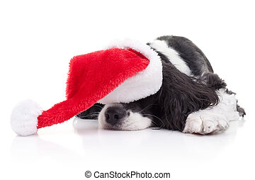 Dog Christmas Dreams - Spaniel dog in Santa hat dreams of...
