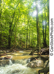 Natural stream from mountain at tropical forest with focused...