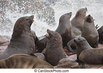 Sea Lions - Group of sea lions fighting over the rocks