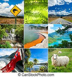 New Zealand set with Kiwi sign, fern and sheep