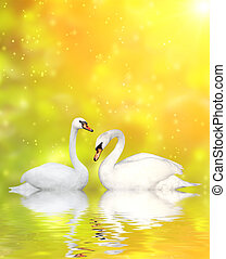 Two swans - Two white swans on yellow background