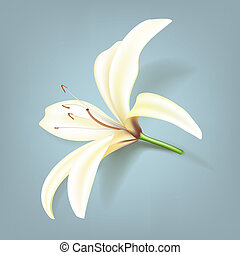 Realistic lily flower - Vector illustration