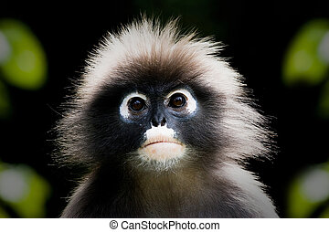 majom, nagyon, elhagyott