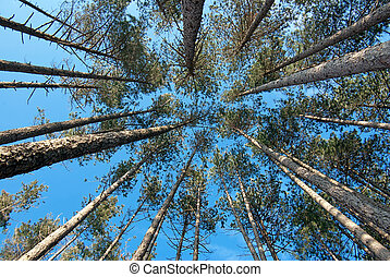 view of trees from below