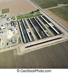 農場, 家畜, 航空写真